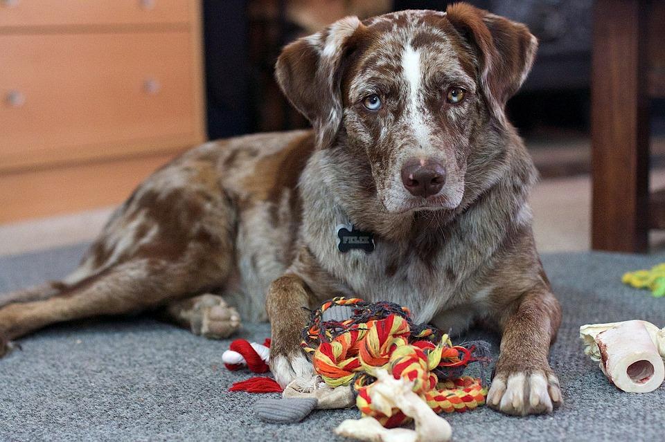 Quelques astuces pour bien choisir les jouets pour chien