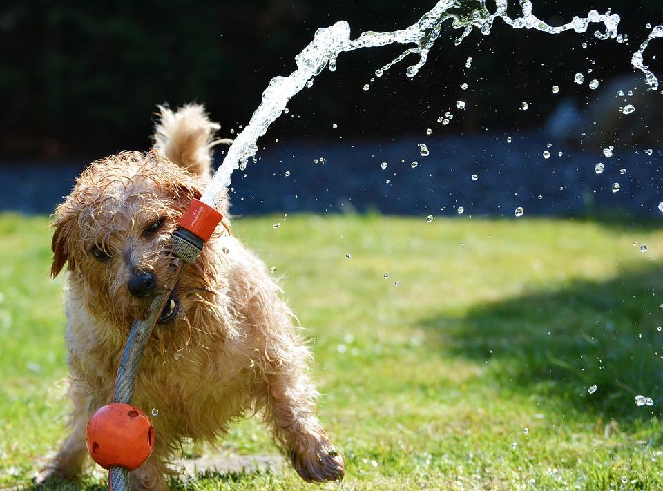 Les meilleurs jouets pour chiens indestructibles